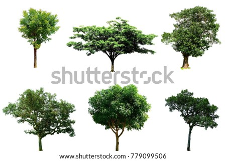 Tree isolated, Big tree on white background or tree isolated image use for web design and tree isolated background #779099506