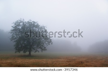 tree isolated by the heavy fog early in the morning in Chianti. Cool tone image.