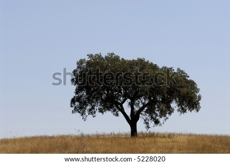Tree isolated in the lanscape