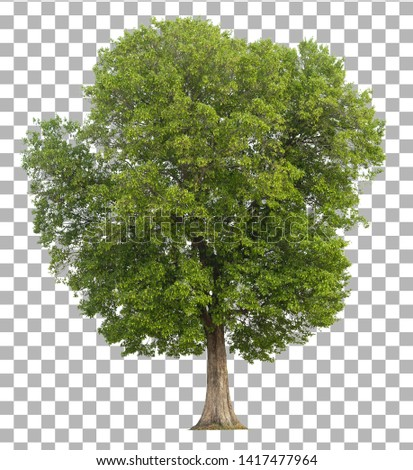 Tree isolated on transparent background. Clipping path included Stock photo ©