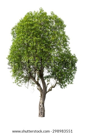 Tree isolated on white background - Shutterstock ID 298983551