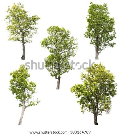 Tree isolated on white background #303164789
