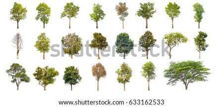 tree  isolated on white background, collections  tree isolated,  tree object