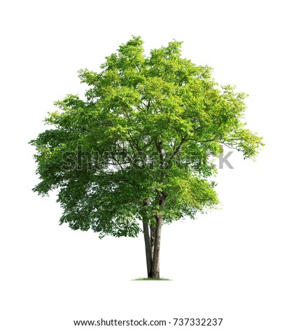 Tree isolated on white background high resolution for graphic decoration, suitable for both web and print media