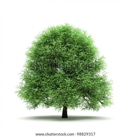 Tree isolated on white background with ground shadow