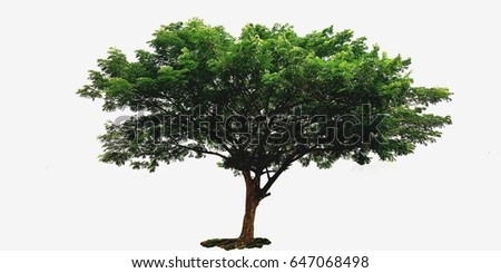 tree isolated or tree isolated background #647068498