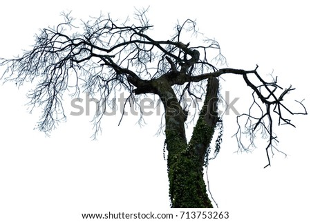 tree isolated or tree isolated background #713753263
