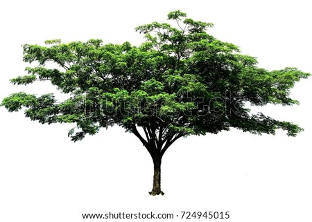 tree isolated or tree isolated background
