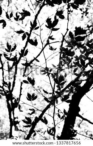 Tree Landscape Backgrounds #1337817656