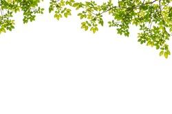 Tree Leaf Frame On White Background