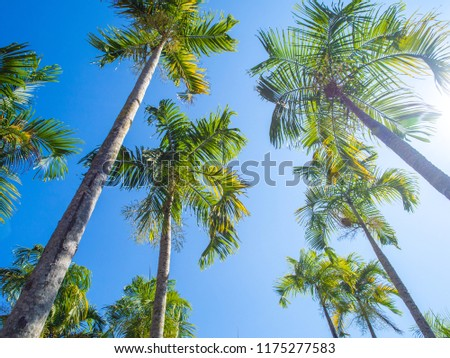 Tree leaf in frame view which looking up against sky, Holiday summer tropical plant in vacation and relaxation concept: coconut greeting card design decoration backdrop idea #1175277583