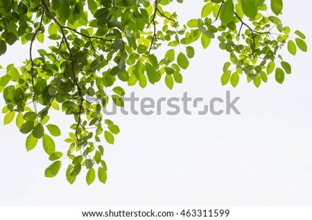 Tree Leaf On White Background #463311599