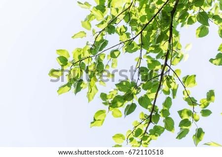 tree leaves #672110518