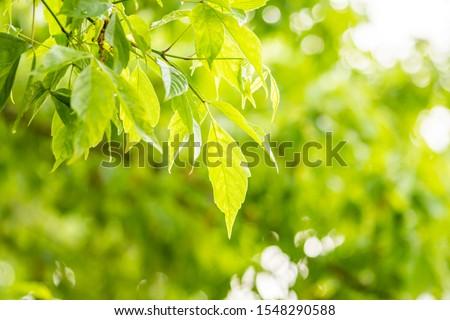 Tree Leaves (Dry Leaves, Green Leaves, Spilled Leaves) #1548290588