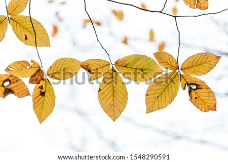 Tree Leaves (Dry Leaves, Green Leaves, Spilled Leaves) #1548290591