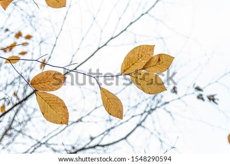 Tree Leaves (Dry Leaves, Green Leaves, Spilled Leaves) #1548290594
