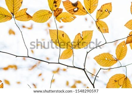 Tree Leaves (Dry Leaves, Green Leaves, Spilled Leaves) #1548290597