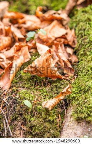 Tree Leaves (Dry Leaves, Green Leaves, Spilled Leaves) #1548290600