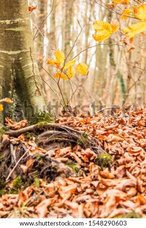 Tree Leaves (Dry Leaves, Green Leaves, Spilled Leaves) #1548290603