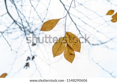 Tree Leaves (Dry Leaves, Green Leaves, Spilled Leaves) #1548290606