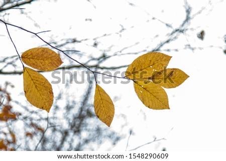 Tree Leaves (Dry Leaves, Green Leaves, Spilled Leaves) #1548290609