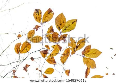 Tree Leaves (Dry Leaves, Green Leaves, Spilled Leaves) #1548290618