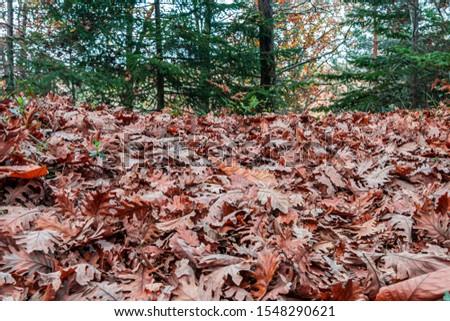 Tree Leaves (Dry Leaves, Green Leaves, Spilled Leaves) #1548290621