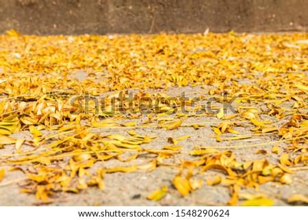 Tree Leaves (Dry Leaves, Green Leaves, Spilled Leaves) #1548290624
