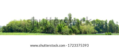 Tree line isolated on a white background Thailand.