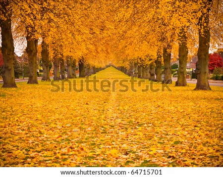 Tree lined avenue in autumn fall with leaves covering the ground.