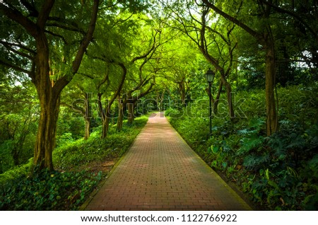 Tree-lined brick path through the forest at Fort Canning Park, one of Singapore's public green spaces.