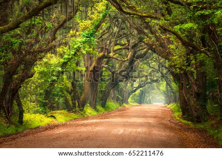 Tree Lined Dirt Road Southern Lowcountry Charleston South Carolina Live Oak Trees on Edisto Island SC