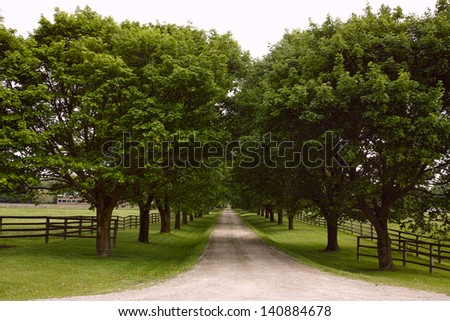 Tree-lined lane