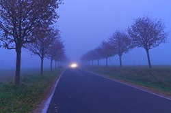 Tree-lined road on foggy autumn morning with spotlight of a car; Poor visibility; Driving in the fog
