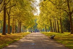 Tree lined street in Hyde Park London, autumn season