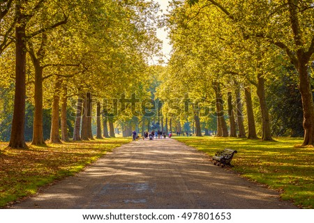 Tree lined street in Hyde Park London, autumn season #497801653