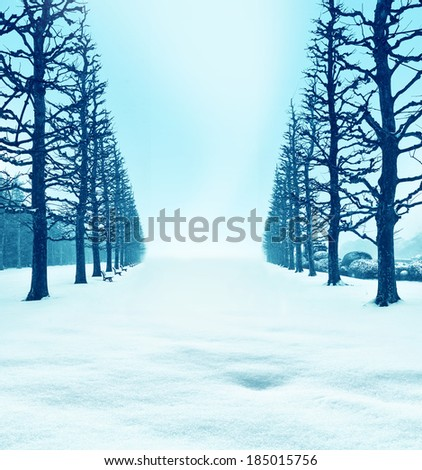 Tree-lined street of snow.Avenue of frosted trees.