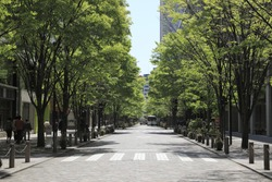 Tree-lined street, Tokyo