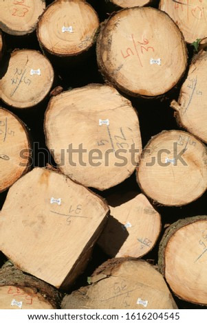 Tree logs are piled up, numbered, labeled and ready for transport