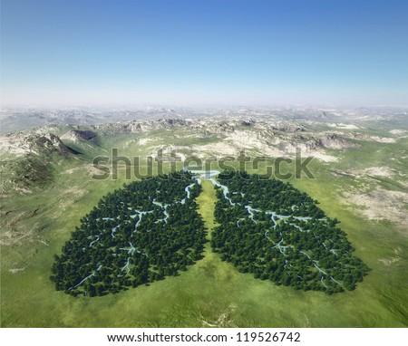 Tree looks like lungs