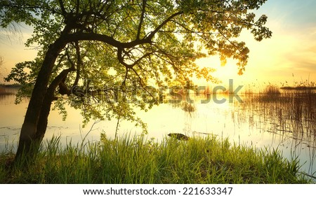 Tree near lake during sunset. Beautiful natural landscape #221633347