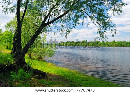 tree near the water of river in sunny spring day