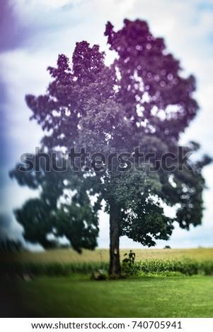 Tree of Dreams #740705941