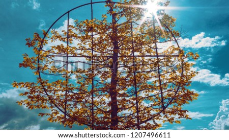 Tree of life - a tree being grown on a circular frame
