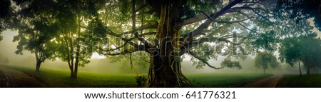 Tree of Life, Amazing Banyan Tree in the fog. Morning landscape. Abstract blur and Soft Focus #641776321