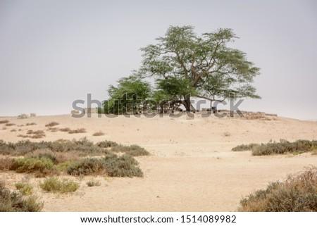 Tree of life in desert