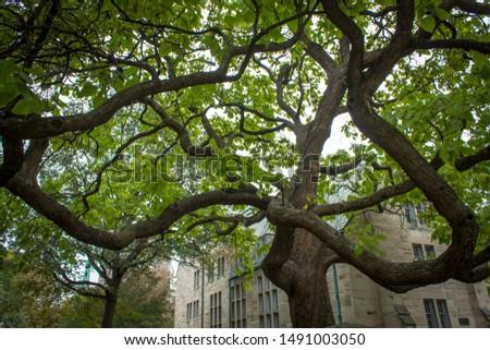 Tree of life. Toronto. Ontario.