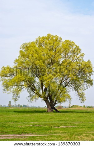 Tree on a background of blue sky and green grass/Tree/Tree