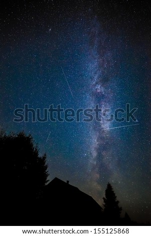 tree on a background of the starry sky.