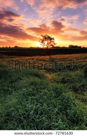Tree on a field on sunset